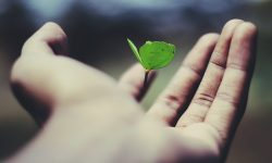 plant seedling in a hand