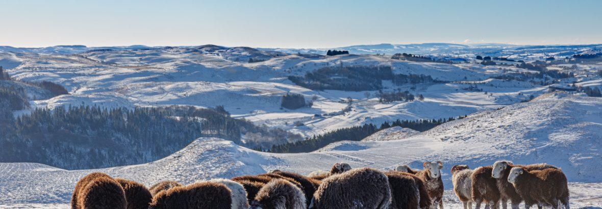 EP Wales December 2020 News Update
